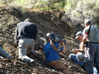 Collecting Jurassic ammonites in the Snowshoe Formation